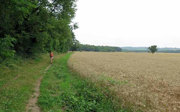 Walking in France: Skirting a wheatfield