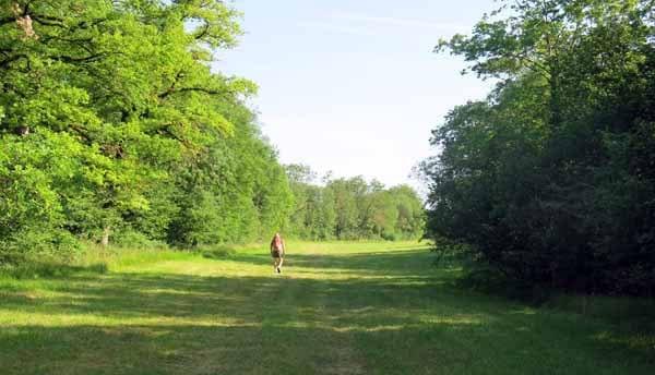 Walking in France: well-mown swathe