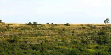 Walking in France: Old terraces