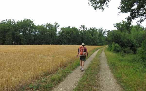Walking in France: Wheat field near Maure