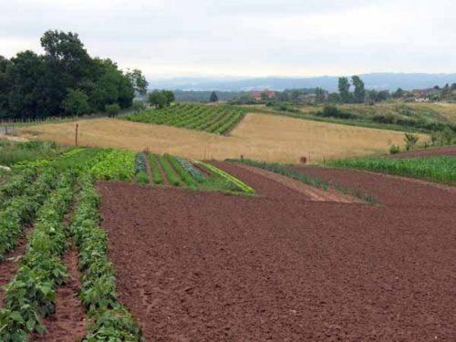 Walking in France: Rich farmland