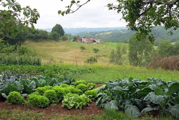 Walking in France: Roadside vegetable patch