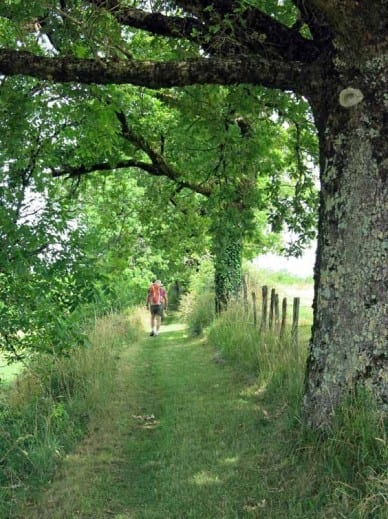 Walking in France: The newly mown lane