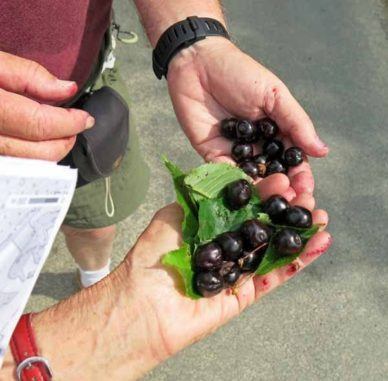 Walking in France: Refreshments