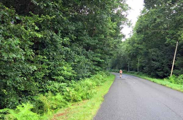 Walking in France: Beside the Vienne in a forest of oaks and chestnuts