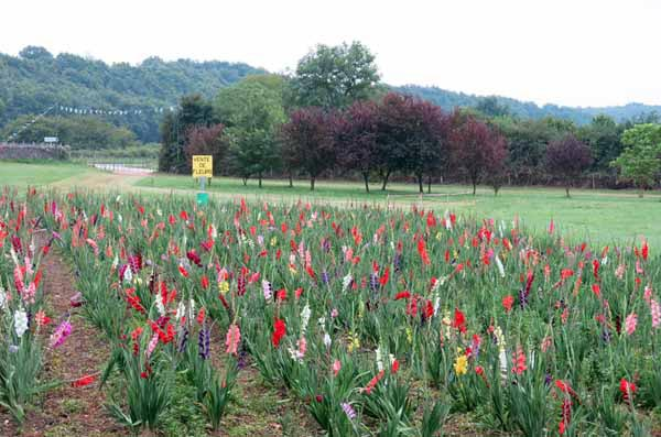Walking in France: Flower farm on the edge of Lussac-les-Châteaux