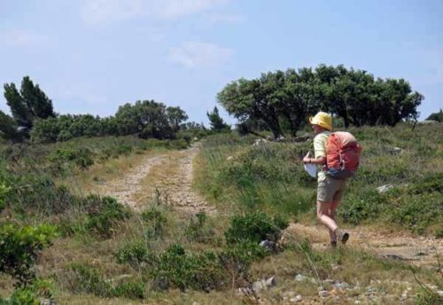 Walking in France: On the garrigue