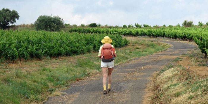 Walking in France: Through some vines