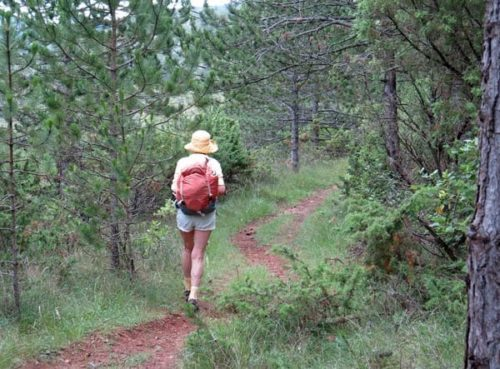 Walking in France: Through the pines