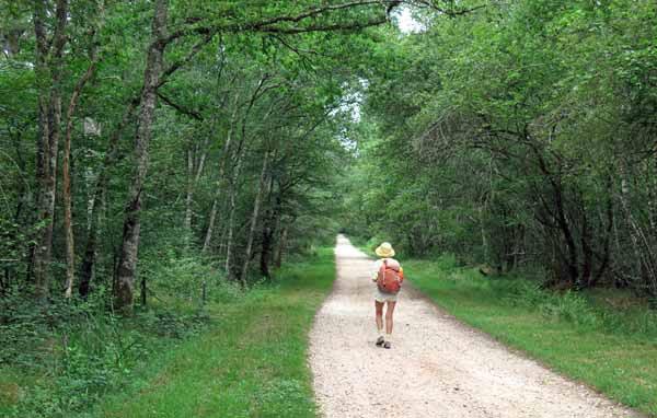 Walking in France: On the GR31 approaching Neuvy-sur-Barangeon