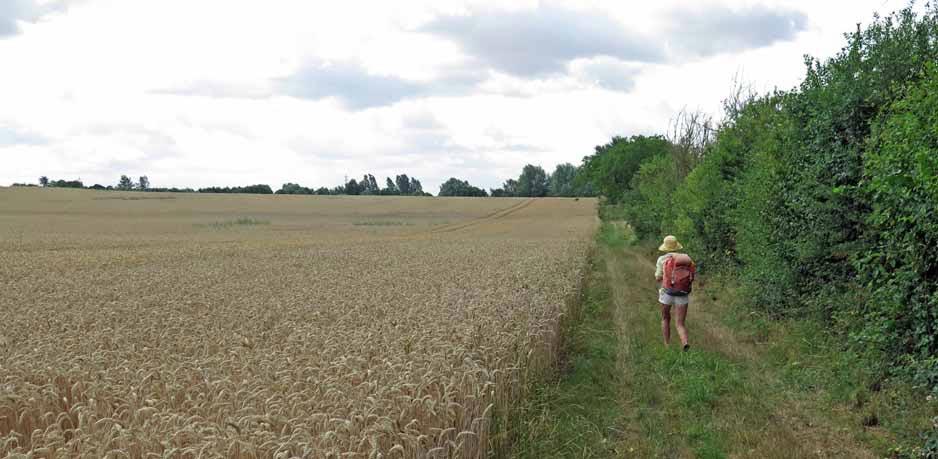 Walking in France: Fields of wheat