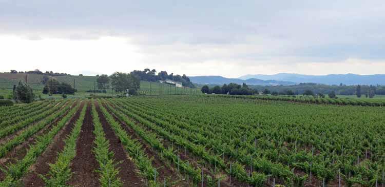 Walking in France: New vines near Pezens