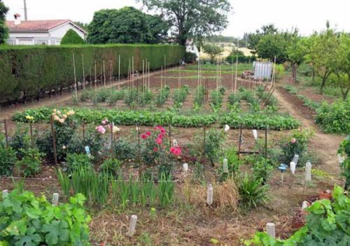 Walking in France: A well tended vegetable patch in Alzonne