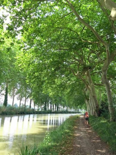 Walking in France: Reflected plane trees