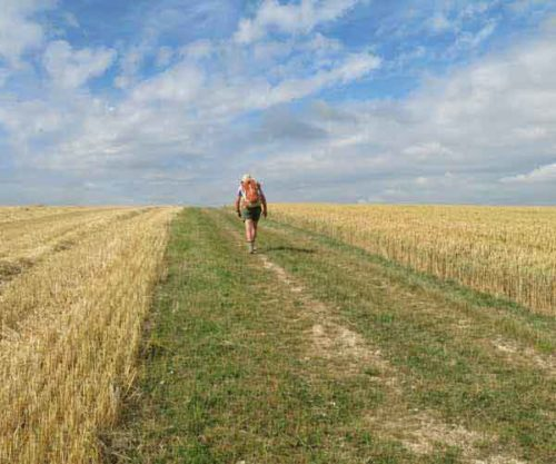 Walking in France: Following the GR654 through a wheatfield