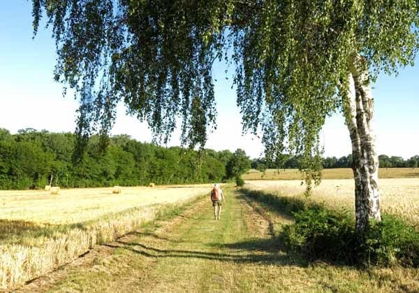 Walking in France: About to enter the dark wood