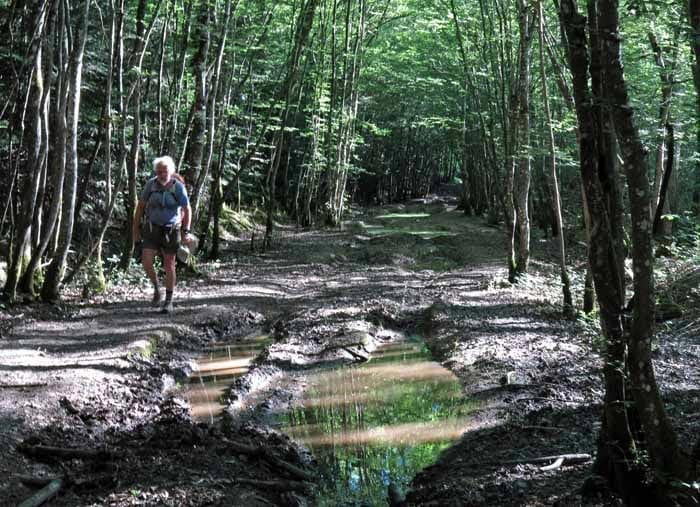 Walking in France: In the pestilential Puisaye forest