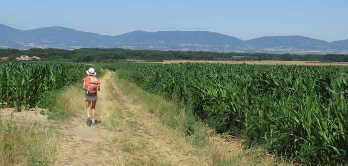 Walking in France: Corn fields, with tomorrow's challenge in the distance, the mountains of the Pilat