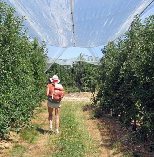 Walking in France: Deep in the orchard
