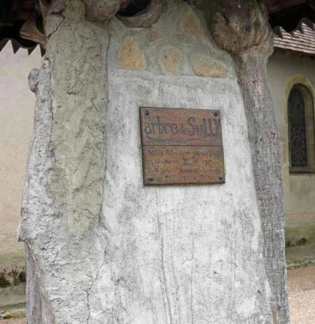 Walking in France: Gannay's mighty stump