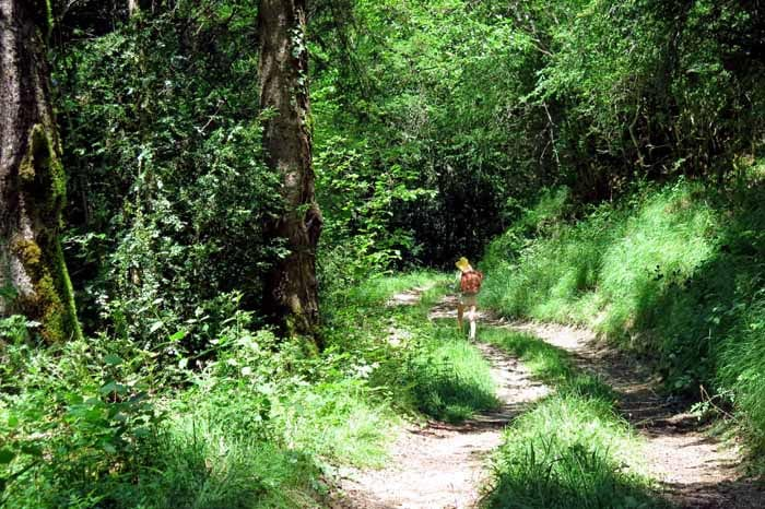 Walking in France: On the shortcut provided by our MAPS.ME app