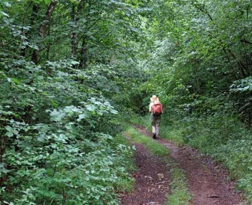 Walking in France: Deep in the forest