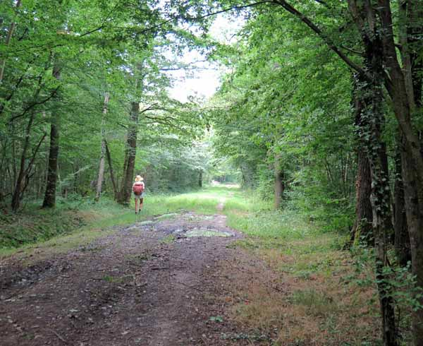 Walking in France: Deep in the forest near St-Pourçain-sur-Sioule