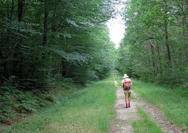 Walking in France: On a forest track going straight to Cosne d'Allier