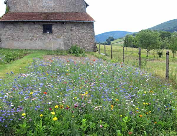 Walking in France: The jachère fleurie at les Charlots