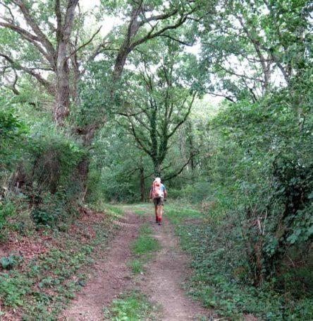Walking in France: Descending through a forest