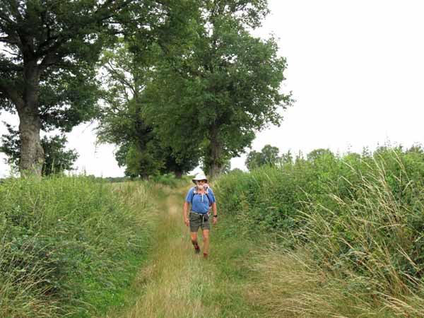 Walking in France: Grassy track