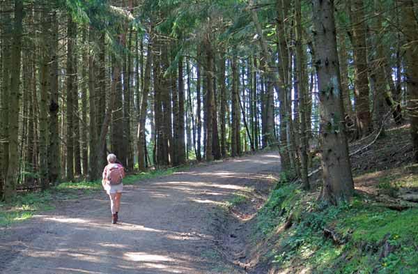 Walking in France: Entering the forest near Vernassal,