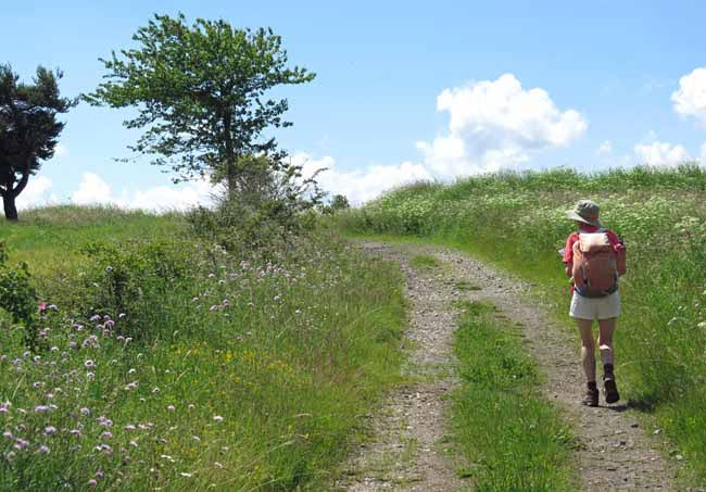 Walking in France: Leaving Fix-St-Geneys, unwatered and unfed, on the GR40