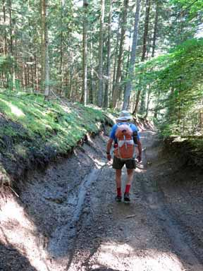 Walking in France: After much trouble, finally leaving the forest