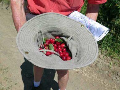 Walking in France: Cherries