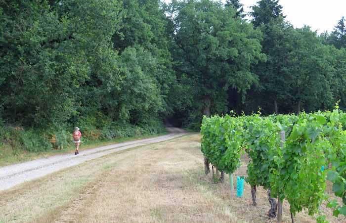 Walking in France: A vineyard near Tilly