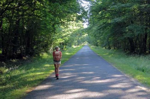 Walking in France: In the Forest of Apremont