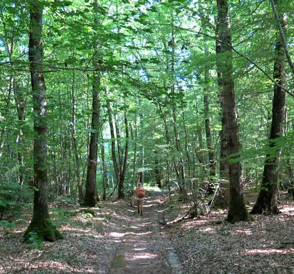 Walking in France: In the vast forest of the Bertranges