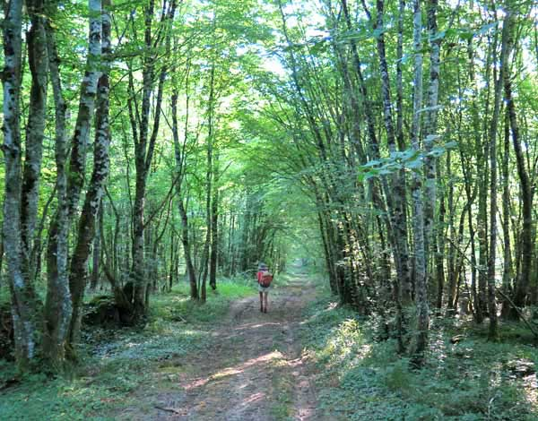 Walking in France: Another forest