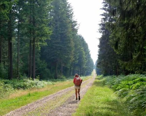 Walking in France: More forest