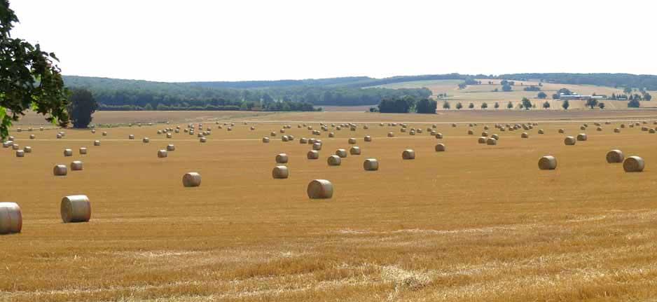 Walking in France: A field of hayrolls near Champlemy