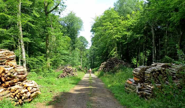 Walking in France: The last forest of the day