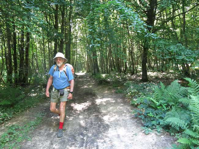 Walking in France: In a forest on the GR654