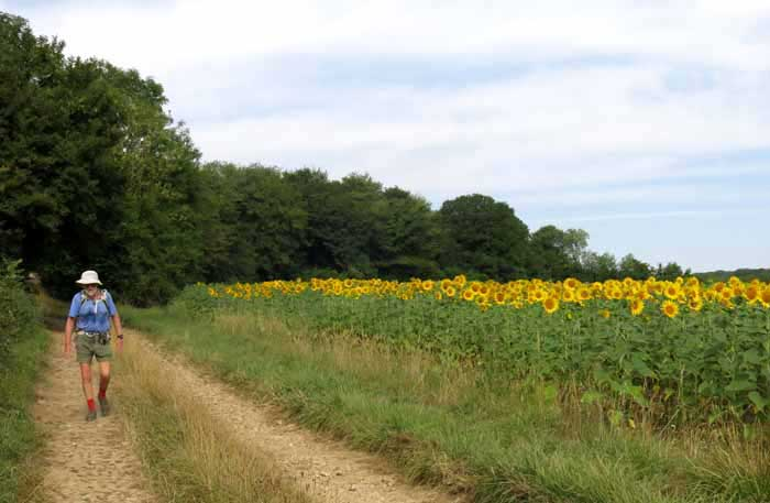 Walking in France: Descending to Champlemy