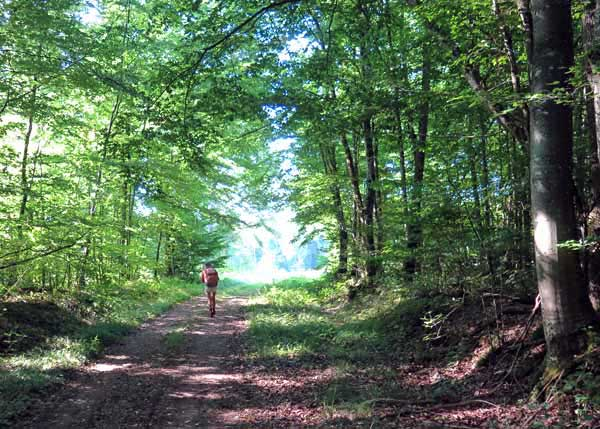 Walking in France: In the forest near Crai